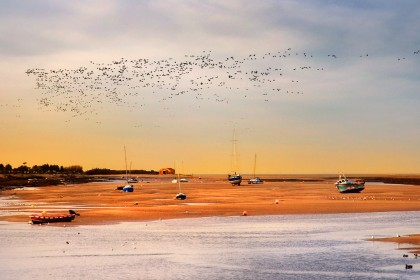 wells-next-the-sea-geese