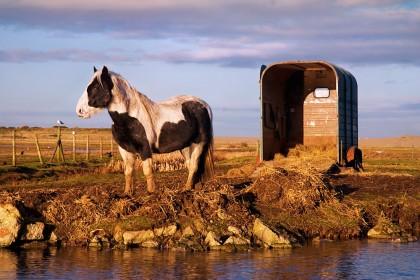 salthouse-horse