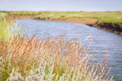 stiffkey-salt-marshes