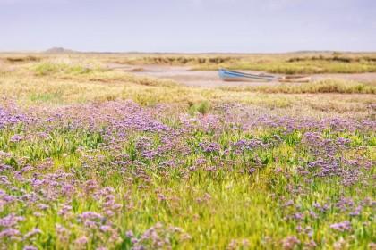 sea-lavender