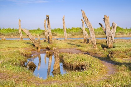 thornham-wooden-stumps