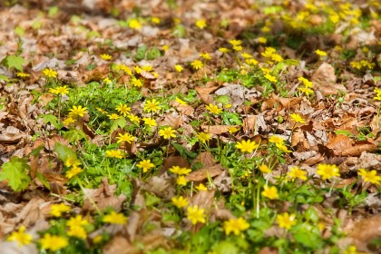 flora-on-the-peddars-way