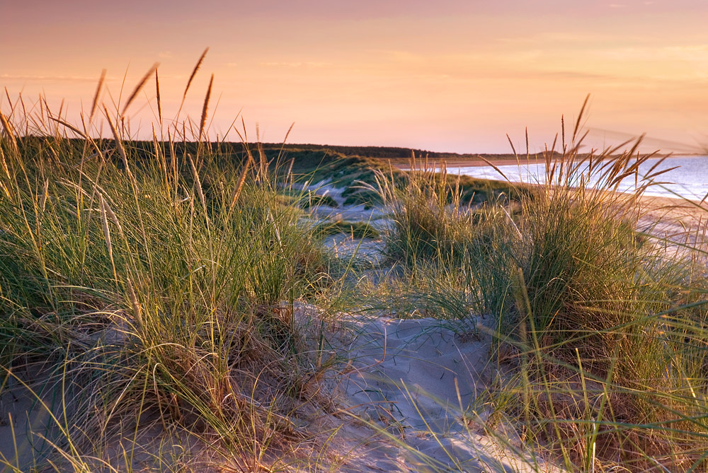 Marram grass on the beach at Holkham in Norfolk